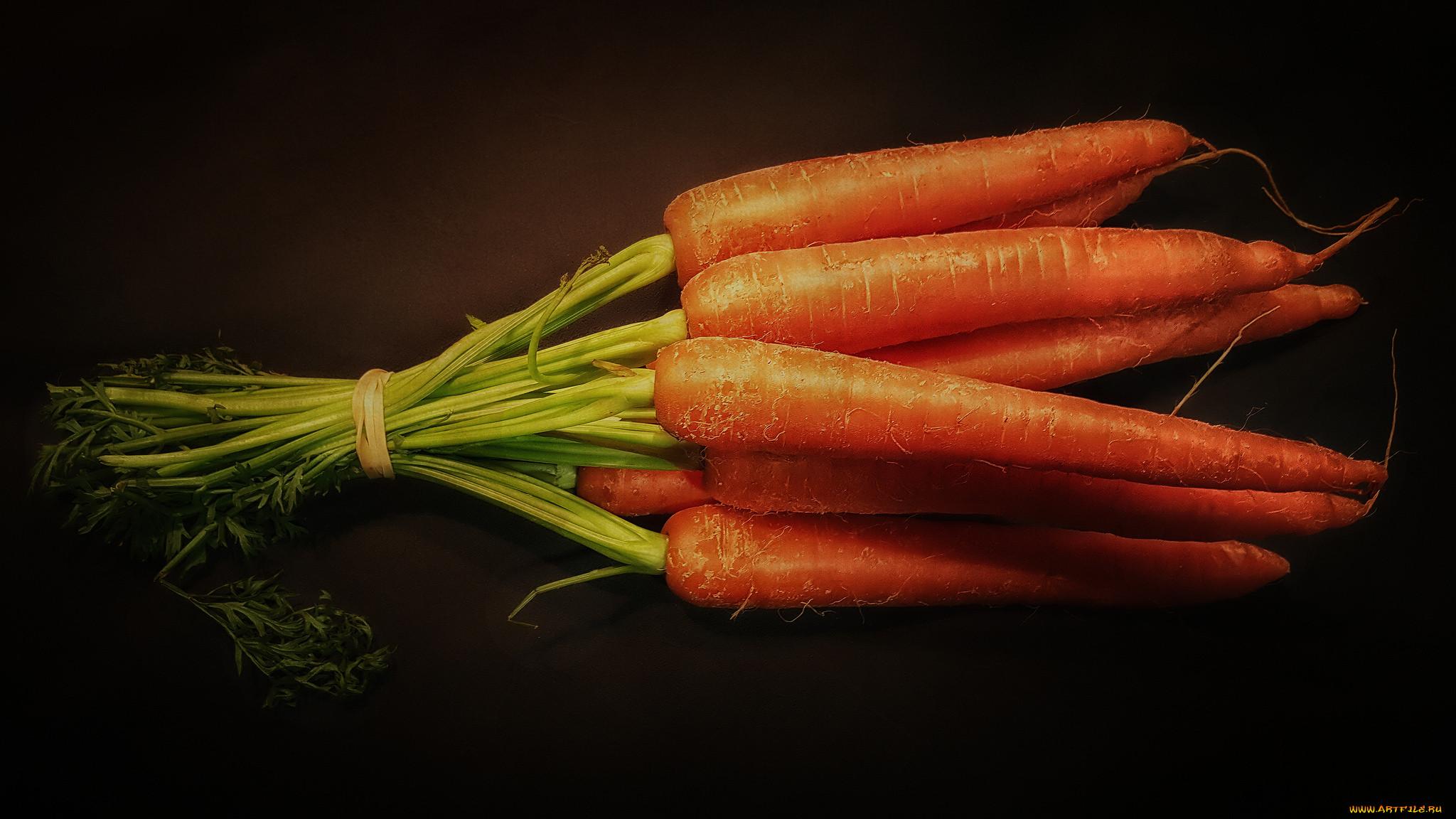 помощью этого морковь фото в хорошем качестве крупным планом жизни можете